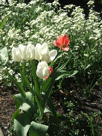 biale, z czerwonym akcentem
