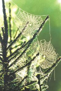 Fot. fot. I. Zamojska; paj�czyna