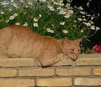 Koty s� popularnymi zwierz�tami domowymi w Tunezji.