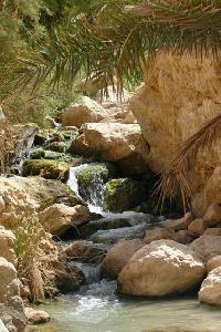 W piaszczystym w�wozie otoczonym przez g�ry ��tego piaskowca, ze ska� tryskaj� �r�de�ka daj�ce �ycie zielonym palmom.
